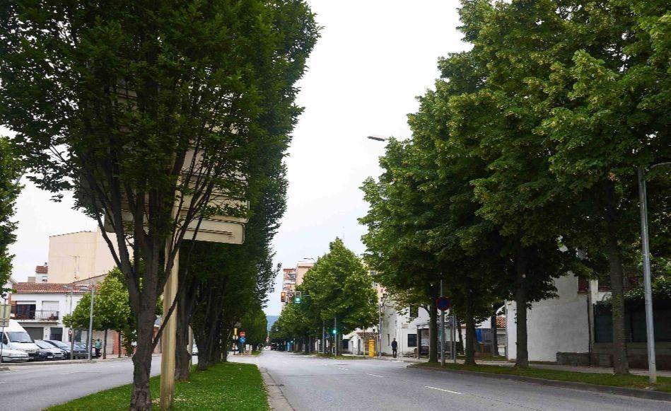 Arbres i espais verds, lliures de Gliofsat