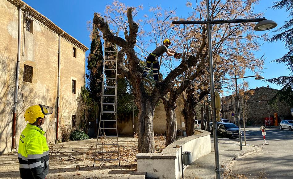 L'Ajuntament de Salt millora la salut dels arbres de la Plaça de la Vila